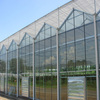 Agricultural Commercial Glass Greenhouse