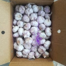 supplier supply whole export natural china product new crop fresh chinese purple violet color normal white garlic price