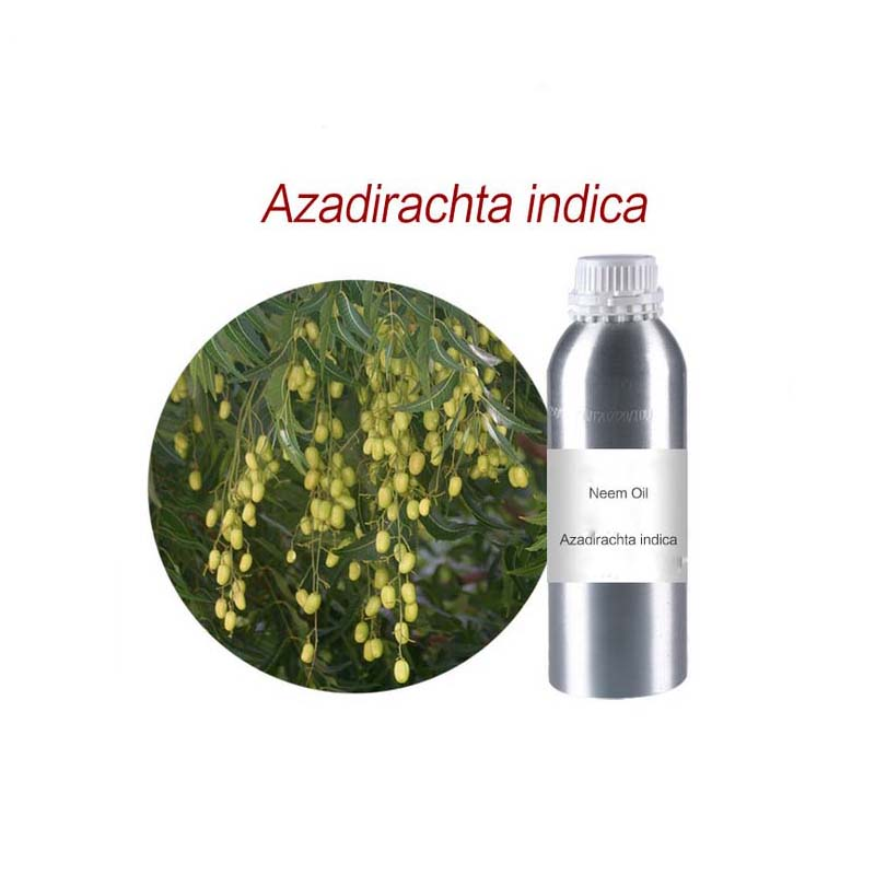 Neem <strong>oil</strong> Azadirachta indica essential <strong>oil</strong>