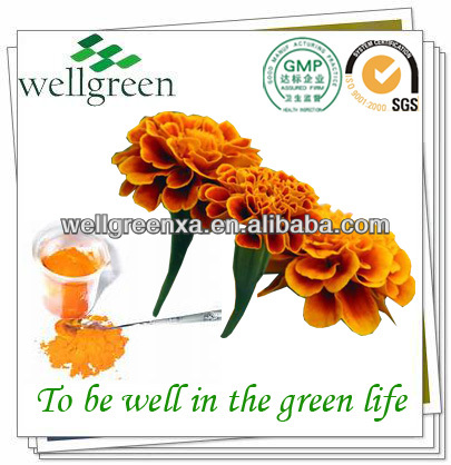 high quality bulk fresh flower marigold