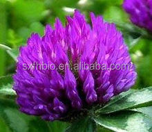 Metabolic Support Red Clover Extract Red Clover Isoflavones