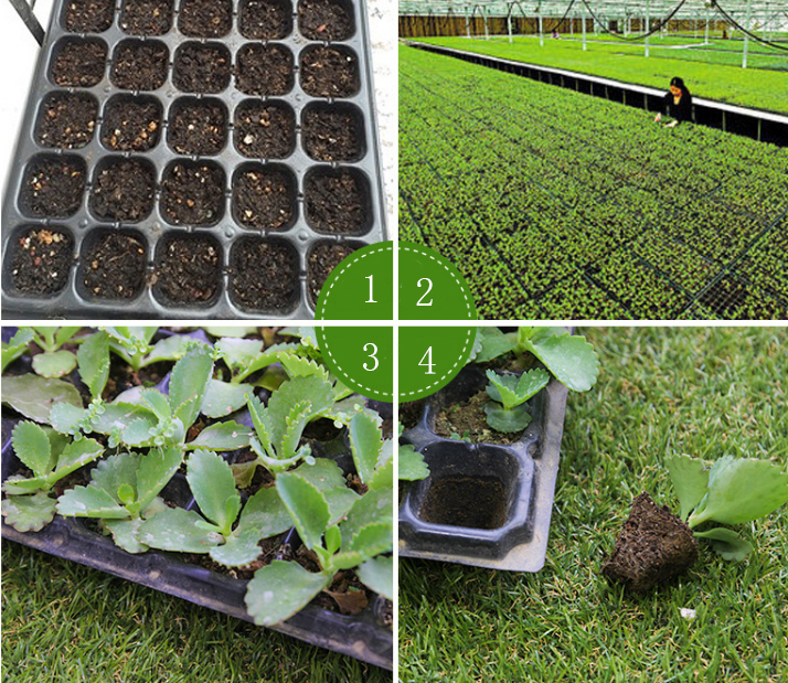 wholesale black plastic seedling tray for plants