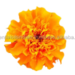 authentic quality Tagetes Oil