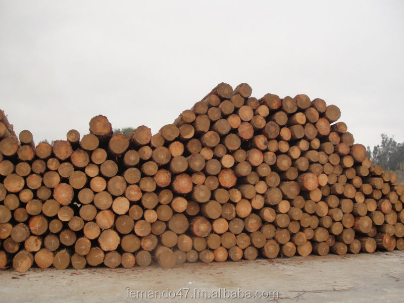 Pine Logs and Sawn Lumber