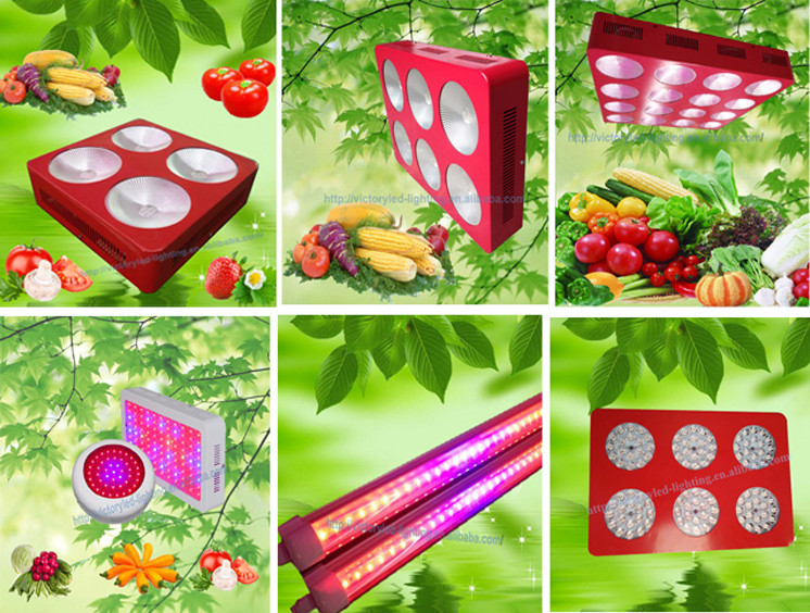 manufacturing plant Light Low cost led growing Light