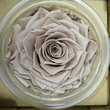 Types of Fresh Cut Flowers Cheap Wholesale Garden Flowers Preserved Roses Box
