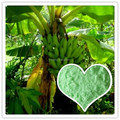 Trace Element Fertilizer NPK 10-6-42+TE Special For Banana Tree