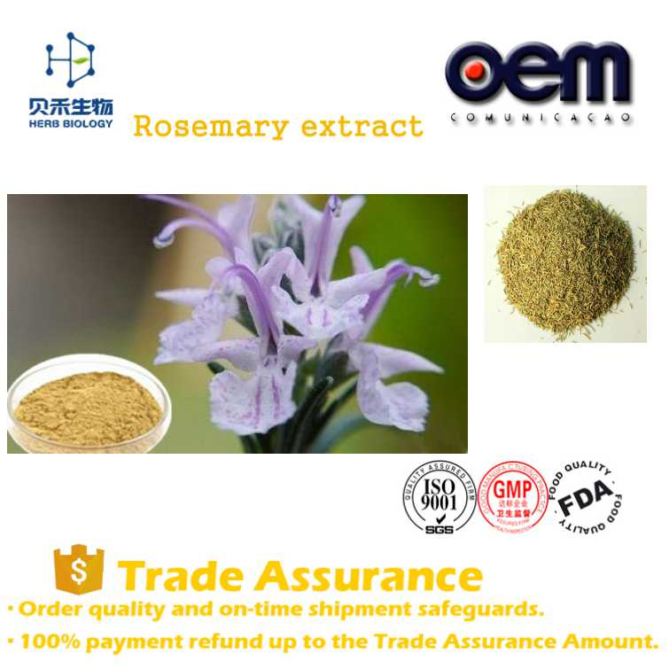 OEM service high quality 100% Natural Rosemary extract powder food and medicine grade relieving pain product Rosemary extract