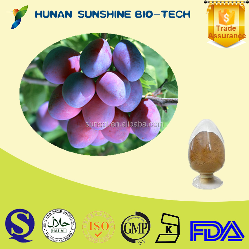 Hot sale Dark plum fruit P.E. powder 10:1 Dark plum fruit extract