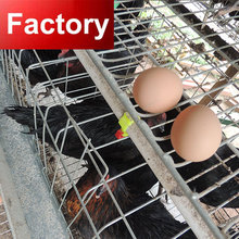 Design automatic feeding drinking 120 layers poultry chicken cage for sale