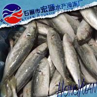 IQF Bulk frozen horse mackerel price from east china sea
