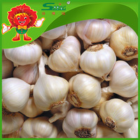 dried Garlic Spring Brands Supplier factory price