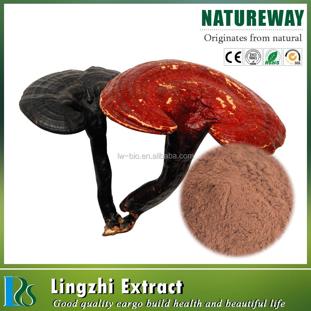 GMP Factory 100% Natural 10%-50% polysaccharide powder chaga mushroom extract