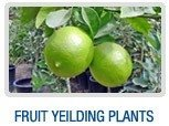 Fruit Yielding Plants