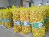 BEST PRICE OF NEW CROP FRESH GINGER