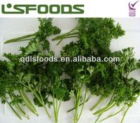 IQF parsley 2013 good price