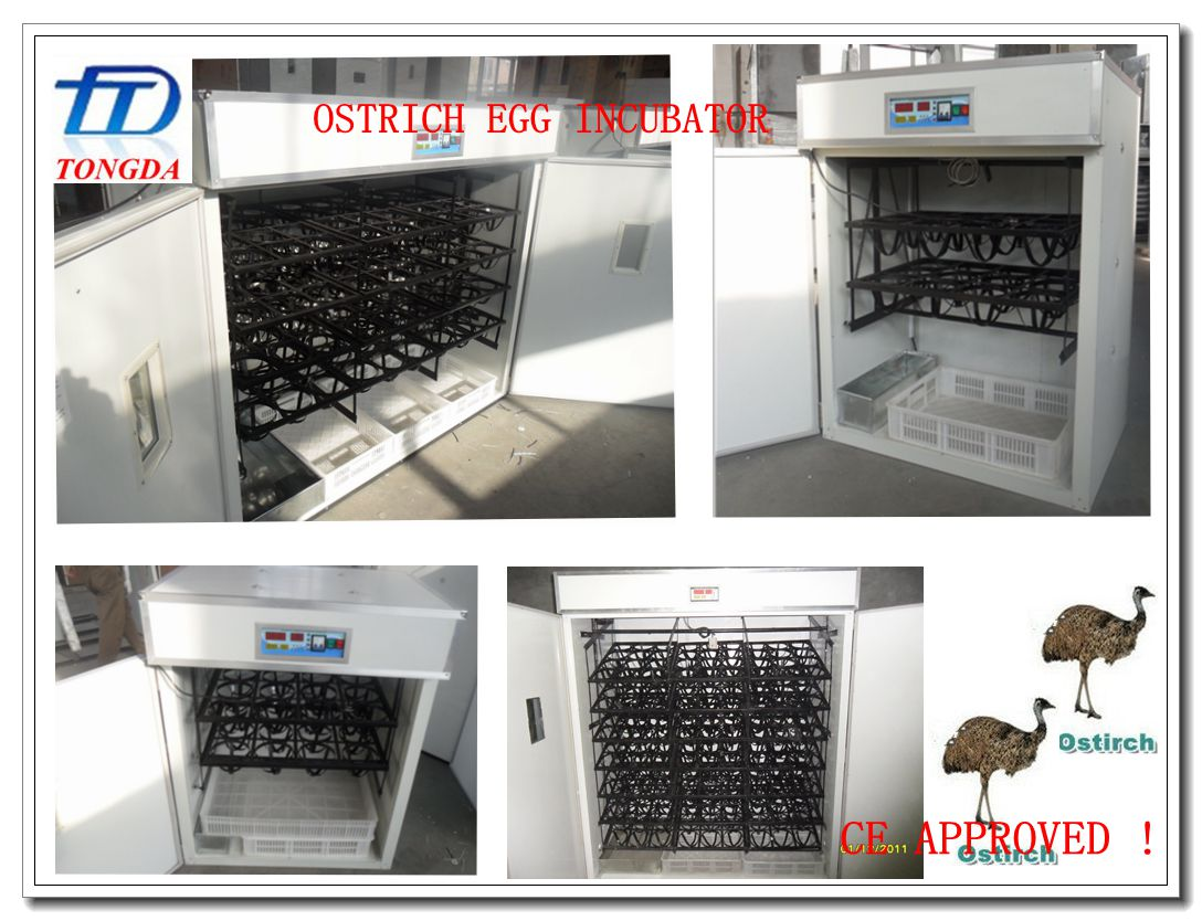 TONGDA new design Ostrich egg incubator /automatic egg incubator for ostrich /poultry farm machine
