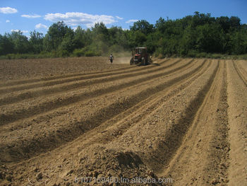 Land for vineyard or Olive tree in the south of FRANCE