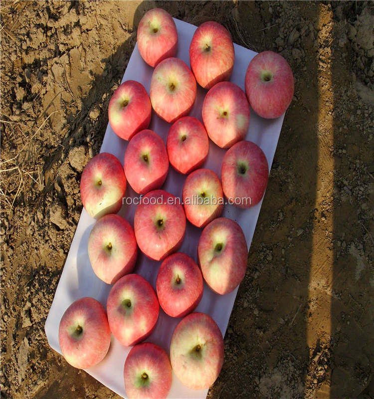 China apple fuji, huaniu, gala, golden, qingguan, red star apples