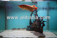 Super Red Arowanas On Promotion**Starts 25/11/2012 And Ends 02/12/2012***Order Now