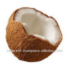 Big size coconut from India