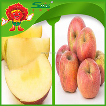fuji apples high quality cheap price red fuji on sale