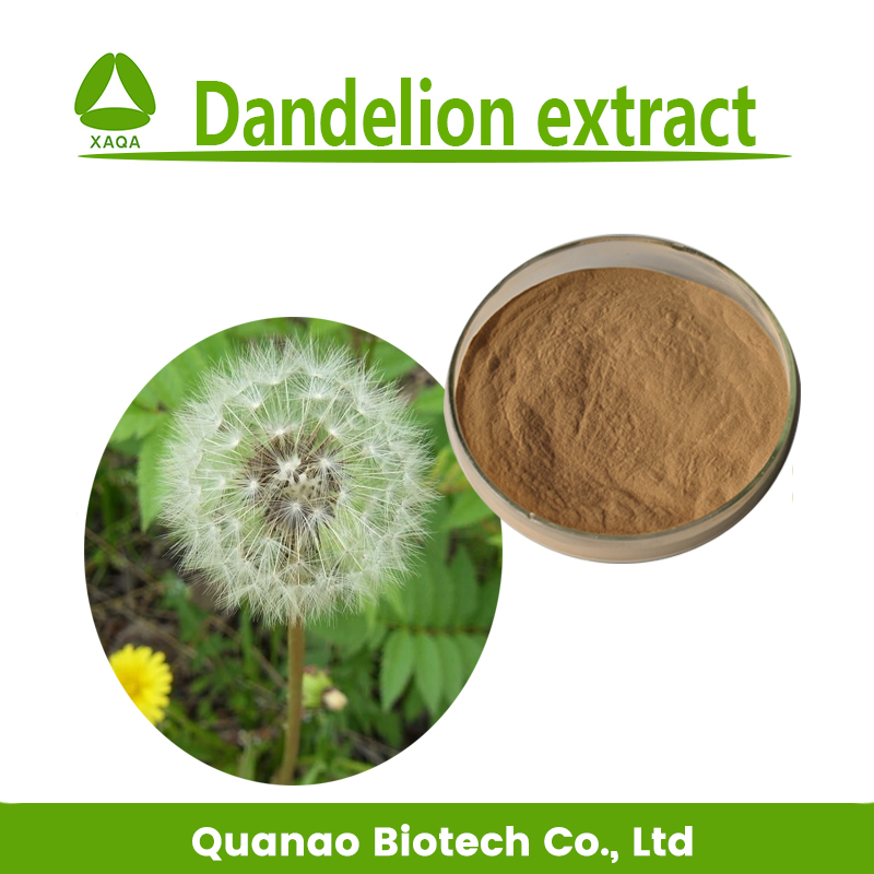 Supply new product dandelion extract /dandelion root extract powder with 10:1 free sample
