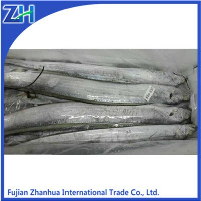 ribbon fish importers/exporters of seafood wholesale frozen ribbon fish price
