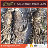 Herbal chinese best medicine ginseng root ginseng energy supplement product
