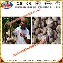 farm used automatic garlic roots cutting machine