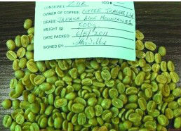 Unroasted Green Coffee Bean Extract/Coffea arabica L.Extract