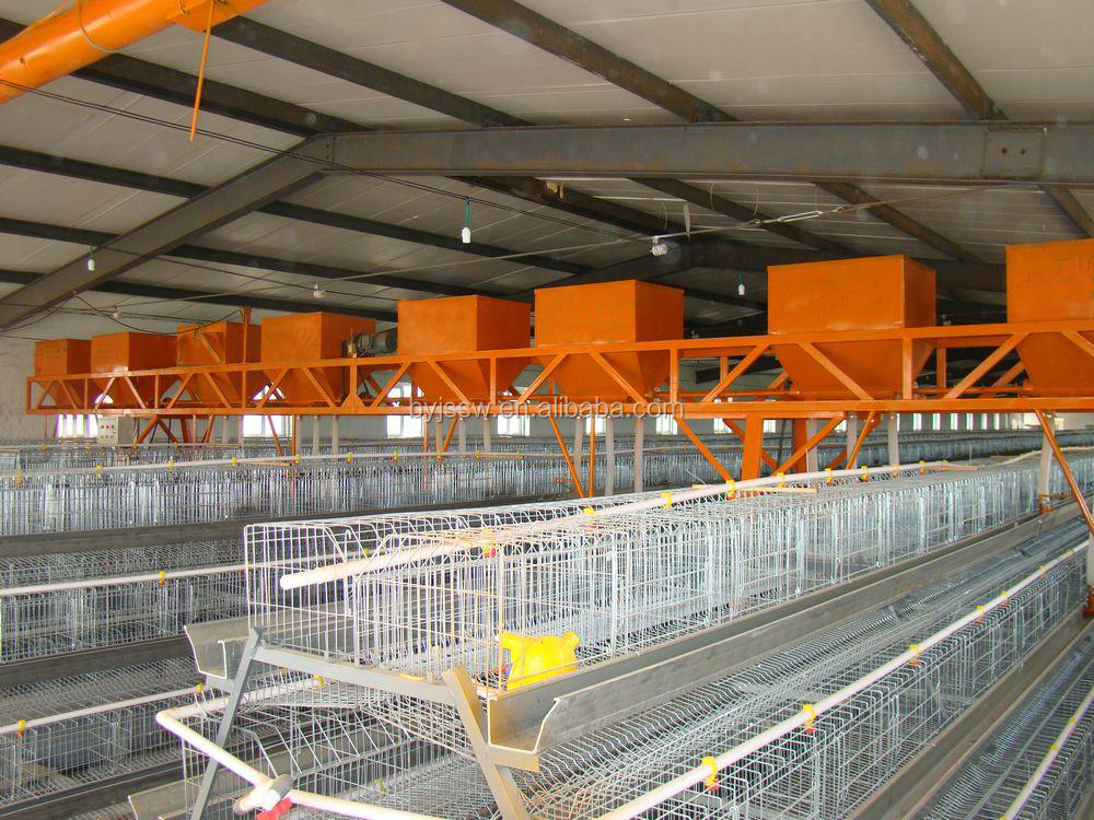 Automatic Feeding And Cleaning Poultry Farm