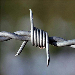 barbed wire 300 (1)