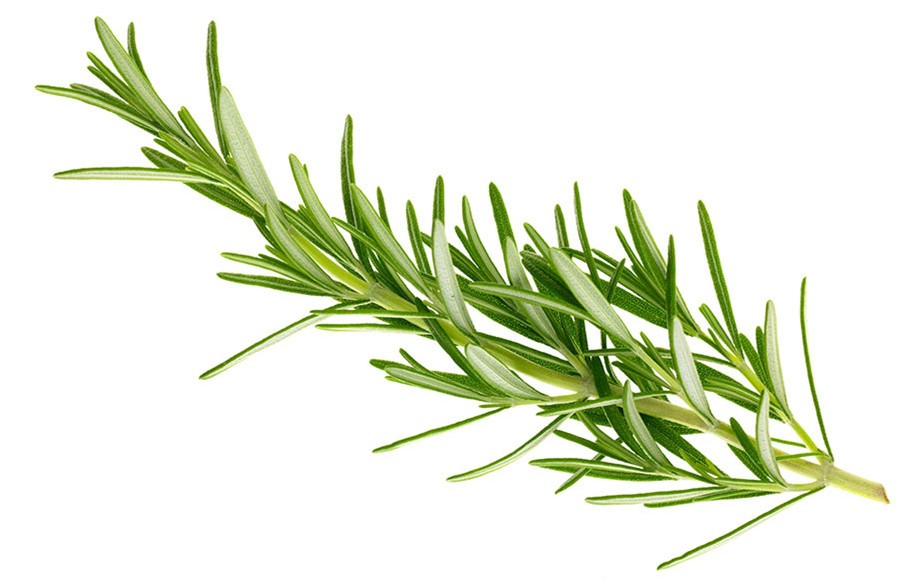 Natural Rosemary Extract 20% Carsolic Acid liquid suppliers