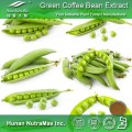 Green Caffee Bean Extract Chlorogenic Acid