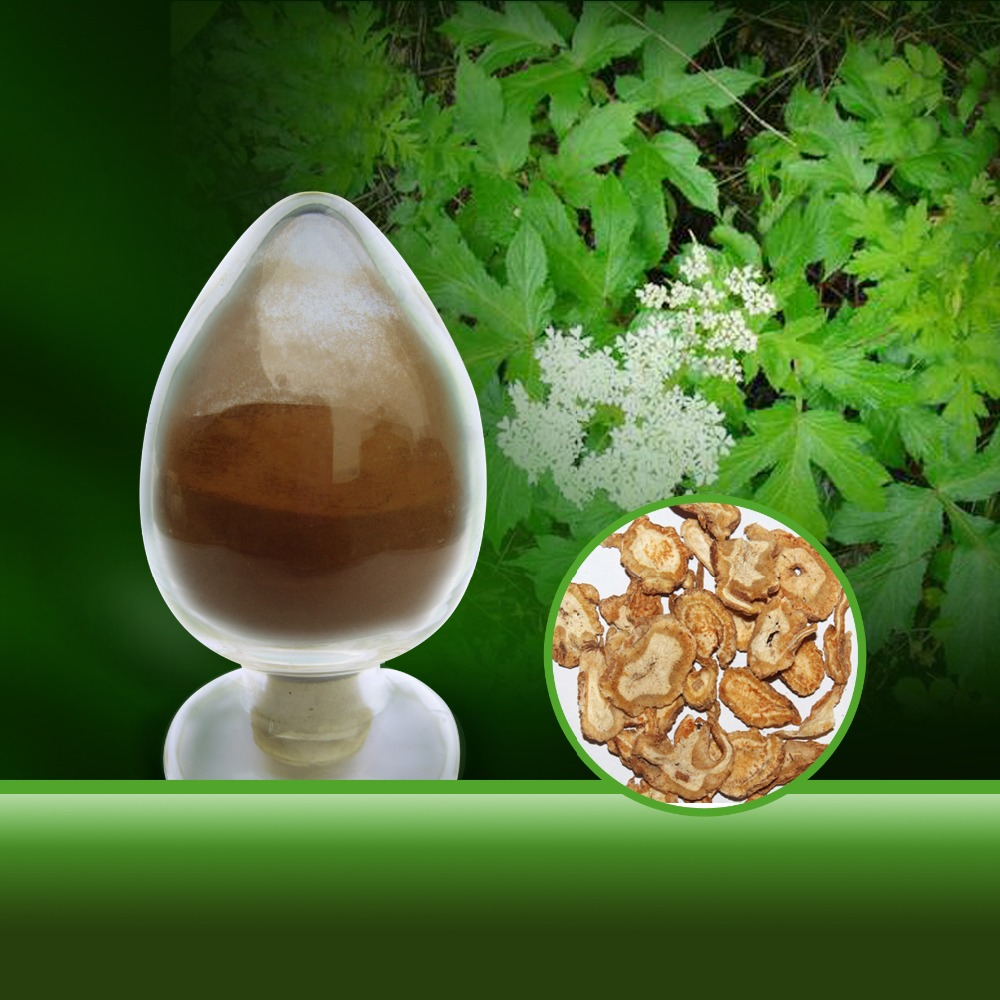 ISO Manufactory Supply Angelica Root Extract
