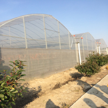 Agriculture Clear Plastic Film Greenhouse For Vegetables