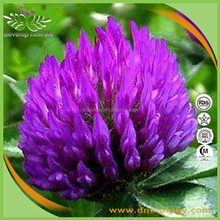 Natural plant extract red clover seeds extract Isoflavones 40%,Trifolium pretense L