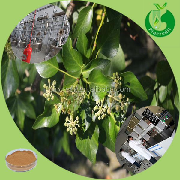 High quality saponin and hederagenin ivy extract