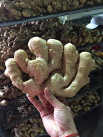 Fresh ginger, half dry ginger, Air dry ginger from China