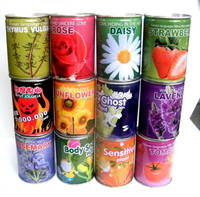 DIY gift tin can flower mini plant office decorative plants with herb seeds