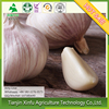 Standardized Vegetable Fresh Garlic Sell Fresh