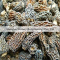2017 Pure nature morel mushrooms for health care