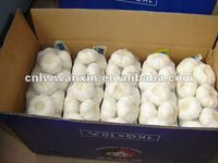 shandong 6.0cm normal white garlic for Japan