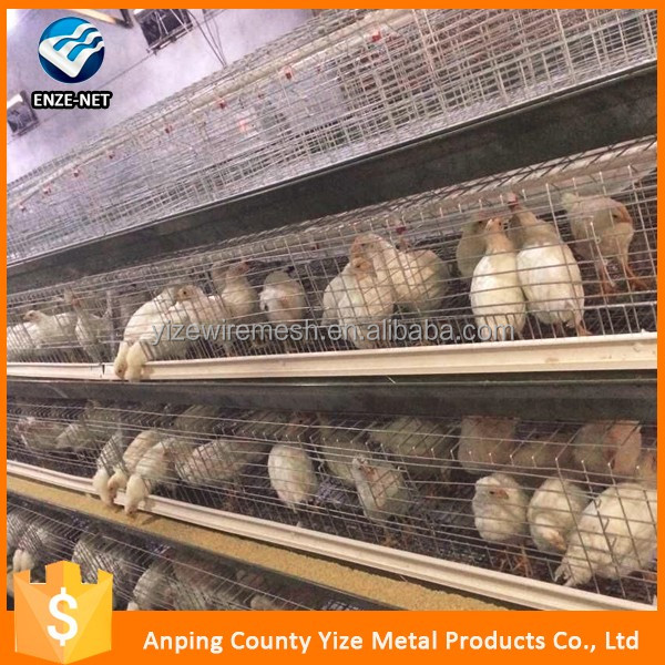 automatic chicken layer cage for sale in philippines/poultry cage guangzhou