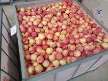 WHOLESALE SMALL FUJI APPLE 125-163 GANSU ORIGIN