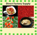 Goji extract/wolfberry extract 30% Polysaccharide