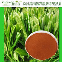 GREEN TEA EXTRACT SUPPLIER TEA POLYPHEOLS 20%-98%