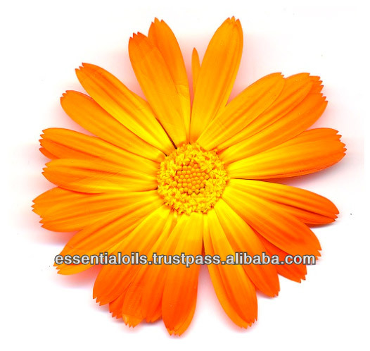BEST EXPORTER OF CALENDULA OIL
