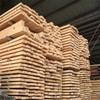 Pine timber for construction